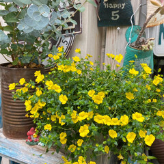 ガーデン雑貨/LIMIA/緑のある暮らし/花のある暮らし/ナチュラルガーデン/バラ好き/... 梅雨の中休み いい天気です🌞 今日も暑く…(4枚目)