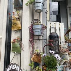 ナチュラルガーデン/寄せ植え/玄関前ガーデン/ガーデニング/花のある暮らし/ガーデン雑貨/... 玄関前ガーデンです。 暖かい気温が続いて…(3枚目)
