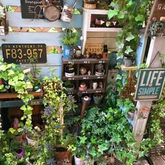デッキガーデン/グリーン/mygarden/LIMIA植物/ガーデニング/ガーデン/... 朝からデッキガーデンの掃き掃除と水やり …