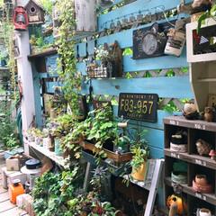 日陰でも育つ植物/リメイク缶/多肉植物/癒しの場所/植物/デッキガーデン/... 家裏のデッキガーデン こちらには、多肉植…