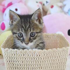子猫/うちの子自慢/カゴ猫 一眼レフで撮りました! 可愛い一枚が撮れ…