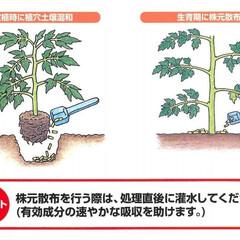 雑貨/園芸/ガーデニング/害虫対策/家庭菜園/エムシー緑化/...