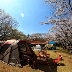 お花見日和/お花見ピクニック/バーベキュー/外遊び/アウトドア/スノーピーク/... お花見キャンプ🌸🍺🌸  桜の下での花見キ…