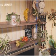 緑のある暮らし/植物のある暮らし/多肉植物/グリーンネックレス/フォロー大歓迎/インテリア 寒い中 屋外でどんどん成長中のグリネ🍃 …