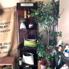 飾り棚/インテリア/DIY/雑貨/ニトリ/イケア/... 又々飾り棚✨   先日作成した棚とお揃い…