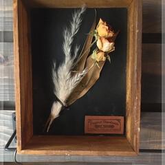 木枠/フラワーボックスアレンジメント/バレンタイン2020/キャンドゥ/ダイソー/セリア/... ダイソーの木枠でプチdiy♪  花の交換…(1枚目)