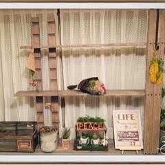 飾り棚ディスプレイ/飾り棚/シェルフ/飾り棚DIY/シェルフDIY/設計/... ディスプレイ棚作製✨ 今回 ラブリコ も…