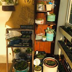飾り棚DIY/インテリア/DIY/100均/セリア/ダイソー/... リメ缶 整理棚 🌱 飾り棚DIY💕  リ…