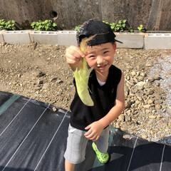 発根/挿し芽/ランナーカット/見守り/世話/栽培記録/... 収穫、観察、開花、栽培終了、世話、見守り…