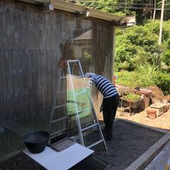 塗る/防腐剤/壁/車庫/中庭/梅雨/... 中庭の壁になってる、農業用車庫の壁♡ 防…