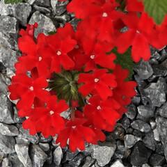 摘葉/観察/開花/収穫/植付け/発根/... 世話、見守り、発根、植付け、料理、冷凍保…(7枚目)