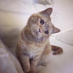 猫派 真似します。