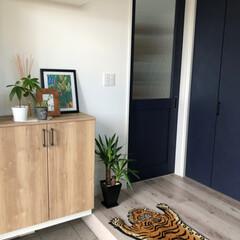 ラグ 絨毯 トラ DETAIL チベタンタイガーラグ スモール | DETAIL(カーペット、ラグ)を使ったクチコミ「ウタマロとメラニンスポンジで玄関掃除🧹 …」