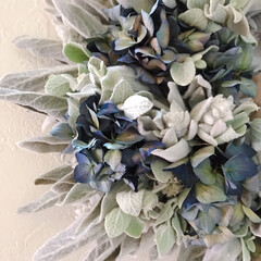 ドライフラワーのある暮らし/リース作り/リース/ラムズイヤー/雑貨/インテリア ラムズイヤーに庭の紫陽花のドライフラワー…(2枚目)