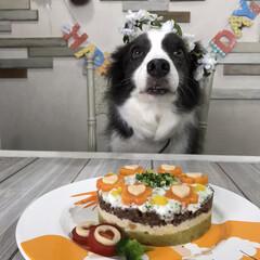 ペット/バースデーケーキ/手作りケーキ/誕生日ケーキ/誕生日/住まい 11月27日は下のワンコの10歳の誕生日…