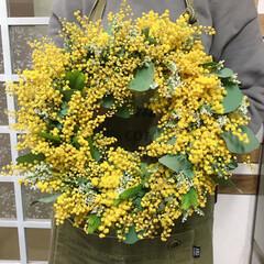 リース/ミモザ/ミモザリース/リース作り/雑貨/ハンドメイド お花屋さんから沢山お花のついたミモザが入…
