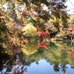 雲場池/紅葉/軽井沢/秋/おでかけ 赤い紅葉も素敵だけど黄色が入ると 華やか…