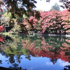 雲場池/紅葉/軽井沢/水鏡/お出かけ 雲場池、まさに水鏡でした.☆.。.:*・…
