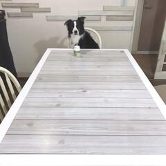 ダイニングテーブル/ダイニングテーブルリメイク/ミルクペイントforガーデン/インテリア/家具 かなり剥げていたダイニングテーブルを塗り…