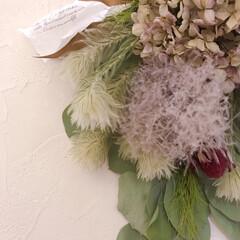 スワッグ/ドライフラワーのある暮らし/アジサイドライ/雑貨/インテリア お友達からもらった紫陽花がドライフラワー…(2枚目)