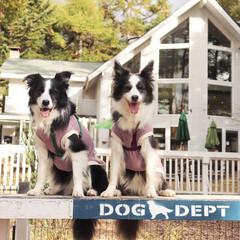 犬と軽井沢/犬とお出かけ/ドッグカフェ/犬/おでかけ 紅葉狩りの後はドッグデプトガーデン軽井沢…