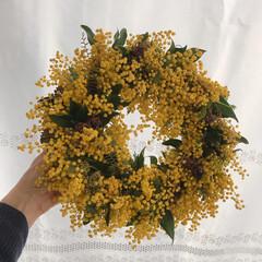 ミモザ/ミモザリース/リース作り/雑貨/ハンドメイド ミモザにお友達から頂いたお花に入ってたグ…