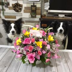 ドライフラワー作り/サプライズプレゼント/誕生日プレゼント/ペット/ペット仲間募集/犬/... 私の誕生日にお義母さんからお花のプレゼン…