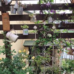 ガーデン/ガーデニング/花のある暮らし/花のある生活/暮らし 去年母の日に買ってもらったミニ薔薇が咲き…
