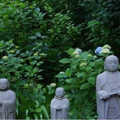鎌倉/国内旅行/令和元年フォト投稿キャンペーン/令和の一枚/LIMIAおでかけ部/旅行/... 最近の写真です。