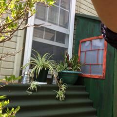 物置小屋/簡単/おしゃれ/暮らし/DIY/跳ね上げ式扉/... 丁度いいサイズが無かったので 野地板で物…(4枚目)