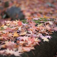 リミアの冬暮らし 落ち葉