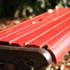 リミアの冬暮らし 冬のベンチ