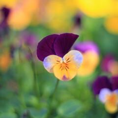リミアの冬暮らし 冬でも綺麗に咲いてます