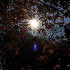 リミアの冬暮らし 木漏れ日