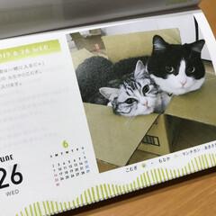 フェリシモ/フェリシモ猫部/まいにちにゃんこカレンダー/まいにちにゃんこ/ねこ/はちわれ猫/... まいにちにゃんこカレンダーの2019/6…