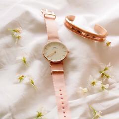danielwellington/ダニエルウェリントン/petiterosewater/timetoblossom/桜カラー/フラワーシーズン限定ウォッチ/... 桜色の淡いピンクのバンドが優しい印象を与…