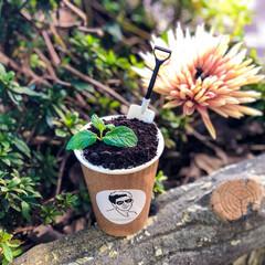 みんなにおすすめ/Cafe/Coffee/京都/コーヒースタンド/コーヒー/... ダブルオースタンドの植木鉢ラテ。 クッキ…