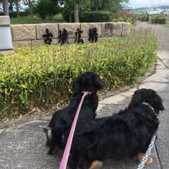 公園散歩/はじめてフォト投稿 紀の川市の平池緑地公園にお散歩