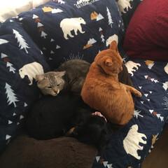 寒い朝 エアコンの風が当たるソファーの上、仲良く…