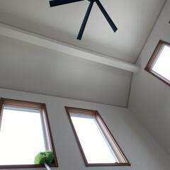 モップ 外壁 掃除 伸縮可能 ロング 窓掃除 クモの巣除去 大掃除 伸びる2Wayロングモップ コジット | コジット(モップ、雑巾)を使ったクチコミ「今日は室内の吹き抜け窓の掃除をしました。…」
