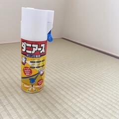 ダニケア/ダニ退治/たたみ/畳掃除/ダニ対策/ダニアース ダニアースをたたみに使いました。  たた…