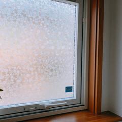 窓シート/窓/目隠しシール/ガラスフィルム/目隠しシート/洗面所 洗面所とカウンター前の窓には目隠し用のガ…