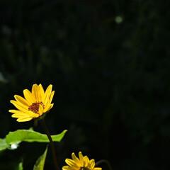 おでかけワンショット/イングリッシュガーデン/横浜/花/はじめてフォト投稿 背景を暗くしてみました(1枚目)