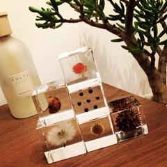 インテリア/花/植物/種 sola cube。今や息子の積み木とな…