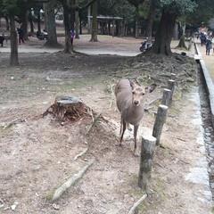 鹿/令和元年フォト投稿キャンペーン 奈良の鹿