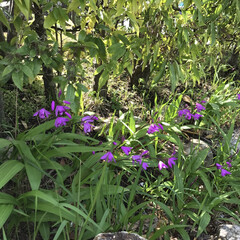 はじめてフォト投稿/風景 浜松 舘山寺付近に咲いていた花