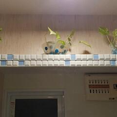 モザイクタイル プチコレガラスMIX ブルー   藤垣窯業(その他建築用タイル)を使ったクチコミ「プチコレガラスMIXモニター当選🎵 嬉し…」(3枚目)