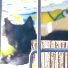 写真/写真部/猫 部活用で撮った写真  7月から8月