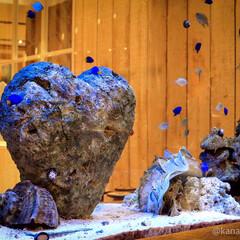 アクアリウムのある暮らし/水槽のある暮らし/ハート型/珊瑚水槽/ロンハーマン好き/サンゴ/... RHC Ron Herman 水槽にハー…