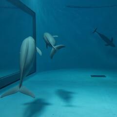 はじめてフォト投稿/令和元年フォト投稿キャンペーン/おでかけワンショット/水族館/イルカ 水族館に行った時のこと、 CGのようなイ…